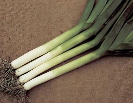 Pancho-10.000 sem.-seminte de praz extratimpuriu cu parte alba lunga si productie ridicata de la Hazera