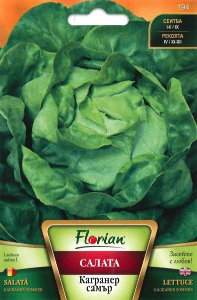 Salata Karganer Summer - 3 gr - Seminte de Salata - primavara si toamna Florian Bulgaria