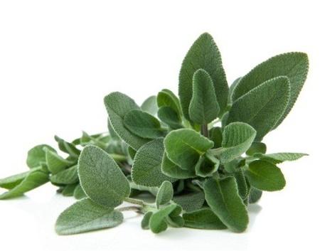 Salvia - Seminte Plante Medicinale Salvia de la Florian