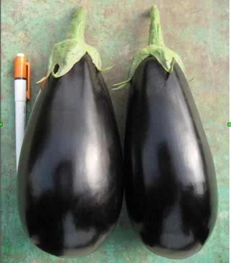 Sara F1 - 500 sem - Seminte de vinete cu plante puternice internoduri scurte si foarte productive de culoare negru inchis la coacere adecvata pentru cultivarea in sere solarii sau camp deschis de la Cora Seeds