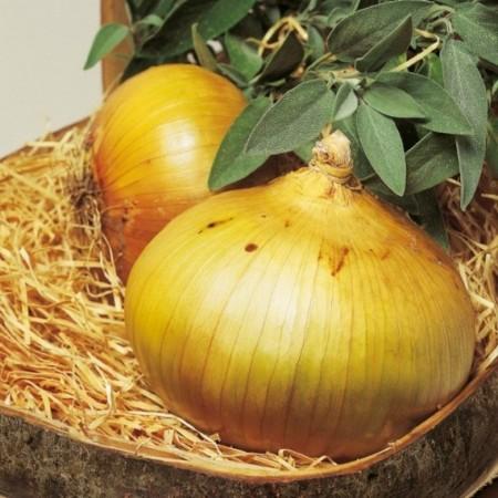 Seminte ceapa Senshyu Yellow ( 125.000 semințe), ceapa galbena, Hektar