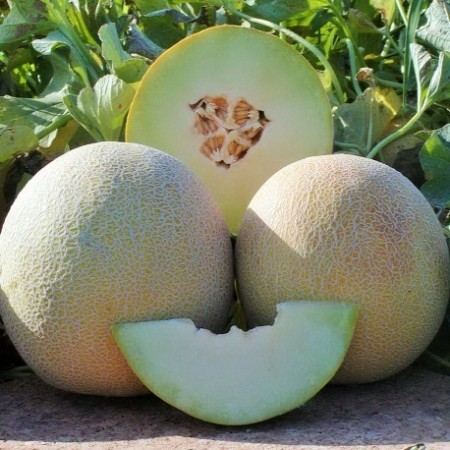 Seminte pepene galben Galia-Super Sweet F1 (0,5 kg), tip Galia, agroTIP