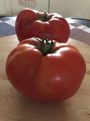 Seminte rosii Azra F1 (1000 seminte), determinate, agroTIP