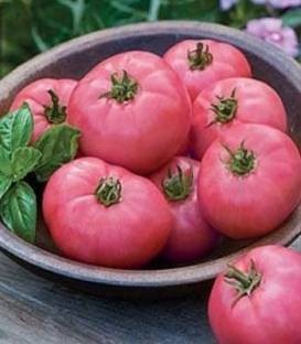Seminte rosii Fuji Pink F1 (500 seminte), semitimpurii de culoare roz, Sakata