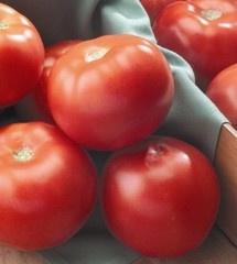 Seminte rosii Mirsini (1 gram), extratimpurii, Seminis
