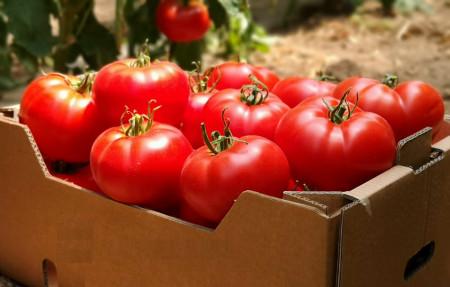 Wrestler F1 seminte tomate hibrid extratimpuriu (100 seminte), Seminis