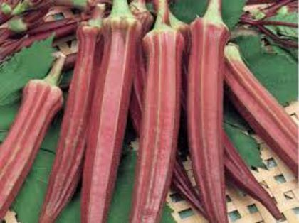 Bame rosii - 10 grame - Seminte de bame rosii soi mediu timpuriu foarte productiv de la Opal