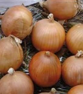 Buenavista F1 - 250.000 sem - Seminte de ceapa ce prezinta o buna adaptabilitate la diferite conditii climatice de culoare aurie si forma globuloasa destinata consumului in stare proaspata si pastrarii pe un termen de la 4 pana la 6 luni de la Enza Zaden