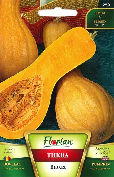Dovleac placintar Viola cu Nervuri - 100 gr - Seminte de dovleac placintar italian mare ajunge panala 10 kg
