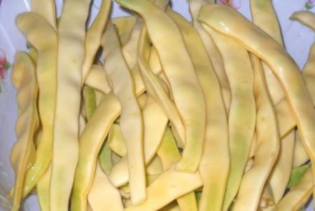 Juliska (500 grame) seminte de fasole urcatoare galbena, soi semitardiv, forma plata, Agrosem