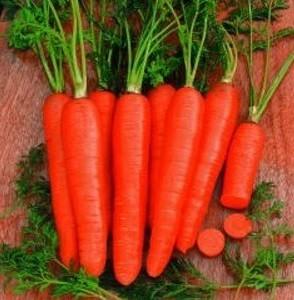 Katop F1 - 25.000 sem - Seminte de morcovi tip Nantes extra timpuriu ce poate fi recoltat si dupa 70 de zile de la semanare dar la maturitate deplina ajungand doar dupa 85 de zile de la Agri Saaten
