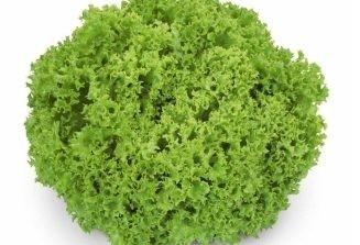 Lozano - 1000 sem - Seminte drajate de salata cu capatani mari foarte atractive de aproximativ 400-450 de grame de la Rijk Zwaan