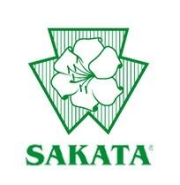 Rootpower F1 - 500 sem - Seminte de portaltoi de la Sakata
