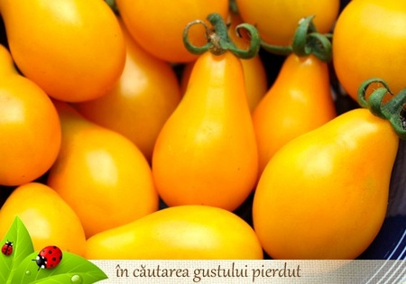 Rosii CHERRY PRUNISOARE GALBENE - 0,5 gr -Seminte rosii Soi timpuriu nedeterminat Florian Bulgaria
