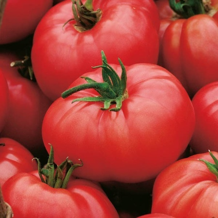 Rosii FAVORIT - 0.5 gr - Seminte de rosii Soi semitimpuriu de la Opal Bulgaria
