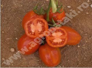 Sandocan F1 - 1000 sem - Seminte de rosii tip Roma prunisoara cu fructe mari si gustoase de la United Genetics
