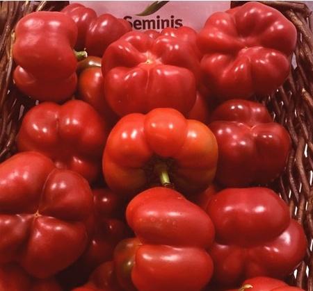 Seminte ardei gogosar Gogomax F1 (100 seminte), timpurietate medie, Seminis