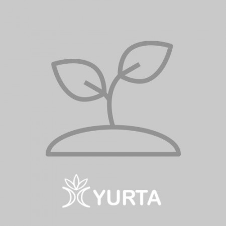 Usturoi frunza - Kit plante aromatice