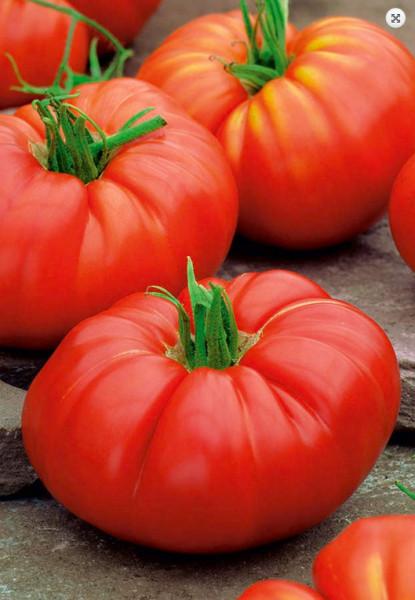 Brutus (100 seminte) rosii soi foarte mare forma rotund-turtita, ajunge pana la 1 kg