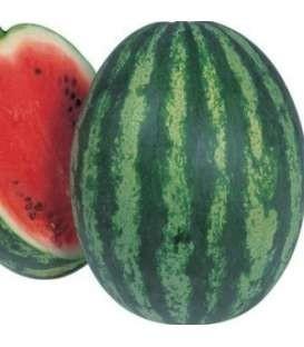 Carmen F1 - 1000 sem - Seminte de pepene verde cu fruct rotund vargat si greutate medie de 7-8 kg miezul fiind de inalta calitate de culoare rosu aprins si dulce de la Takii Seeds