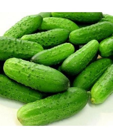 Componist F1 - 250 sem - Seminte de castraveti fructe cilindrice culoare verde de la Rijk Zwaan