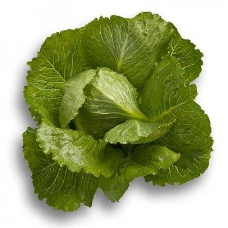 Crunchita - 1000 sem - Seminte drajate de salata tip romana cu frunze alungite groase si carnoase de culoare verde mediu atat la interior cat si la exterior de la Rijk Zwaan