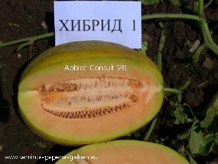 Hibrid 1 F1 - 5 gr - Seminte de Pepene Galben bulgaresti profesionale de la Opal