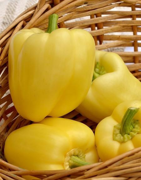 Hildi seminte ardei gras (2000 seminte), culoare galbena, Agrosel