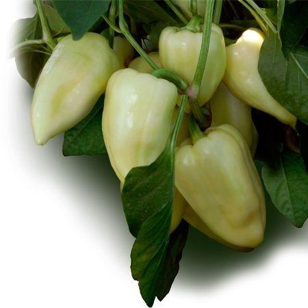 Julianus F1 - 1000 sem - Seminte de ardei conic dulce cu crestere continua fiind o varietate potrivita pentru cultura intensiva atat pentru cultura protejata cat si in camp deschis de la Duna-R