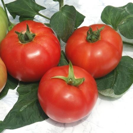 Kalina F1 (50 seminte) Tomate Nedeterminate Timpurii, Geosem Select Bulgaria