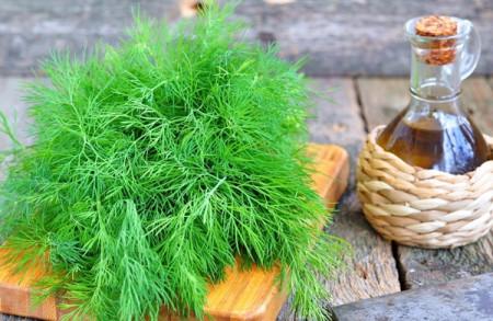 Marar (20 grame), seminte de marar planta anuala, aromat, Agrosem