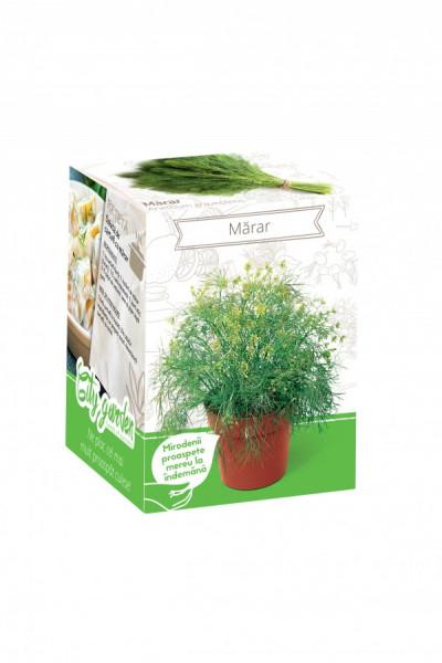 Marar - Kit plante aromatice