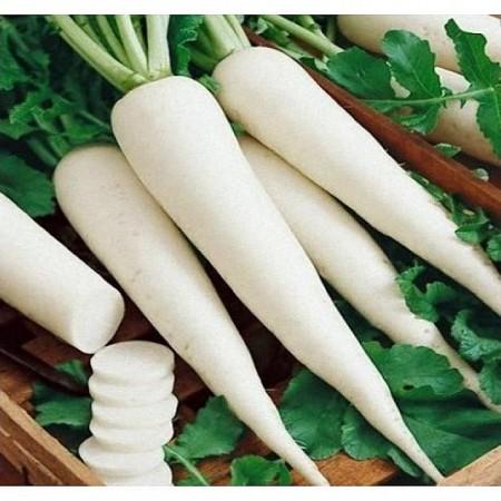 Mino Summer Cross F1 - 1000 sem - Seminte de ridichi albe ce produc radacini albe netede de un alb intens foarte uniforme cu rezistenta la boli fiind recomandate pentru culturile de vara-toamna de la Sakata