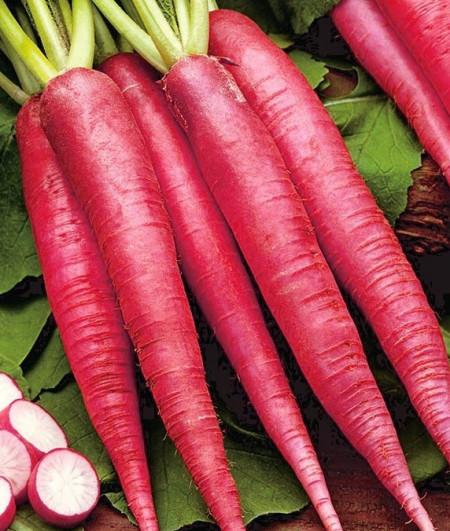 Ostergruss Rosa (4 gr) seminte de ridichi de vara semilungi, conice, culoare roz-carmin, Agrosem