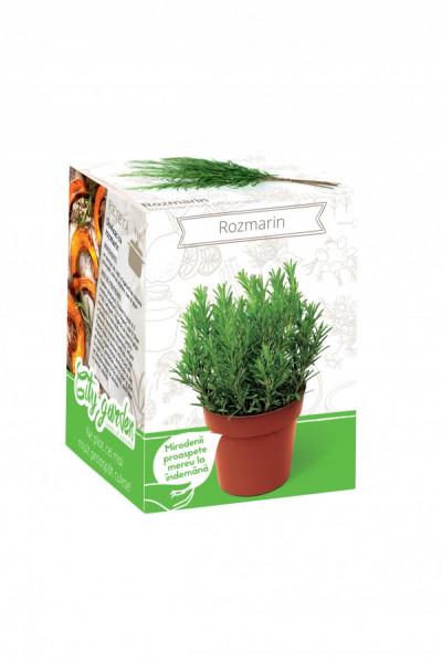 Rozmarin - Kit plante aromatice