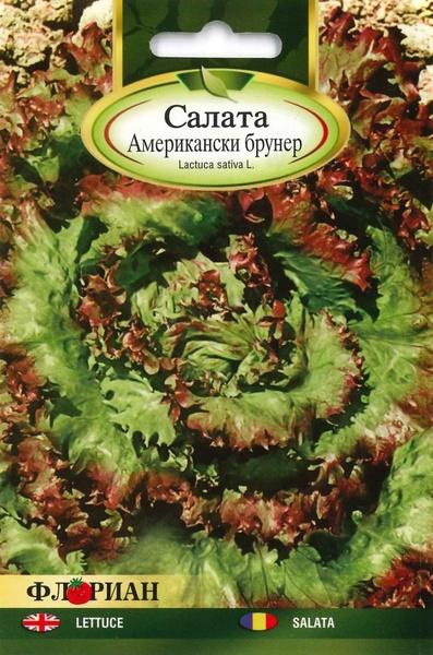 Salata BRAUNER AMERICAN - 2 gr - Seminte de Salata Soi timpuriu Florian Bulgaria