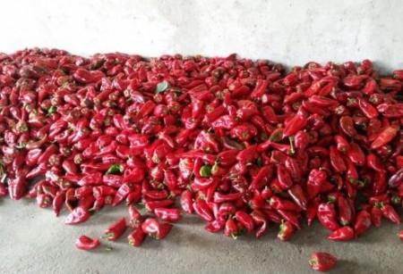 Seminte de ardei kapia Max (500 gr), soi semitimpuriu, Pop Vriend