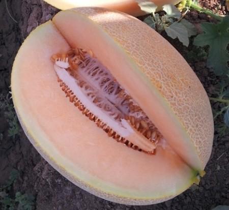 Seminte pepene galben Lilian F1 (100 seminte), tip Ananas, agroTIP