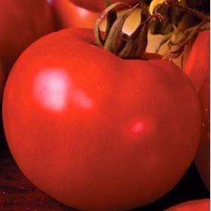 Seminte rosii Marissa F1 (100 seminte), nedeterminate, Seminis