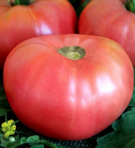 Seminte rosii Rozali (1 gr), soi de tomate roze mari, nedeterminat tip Gigant, Florian
