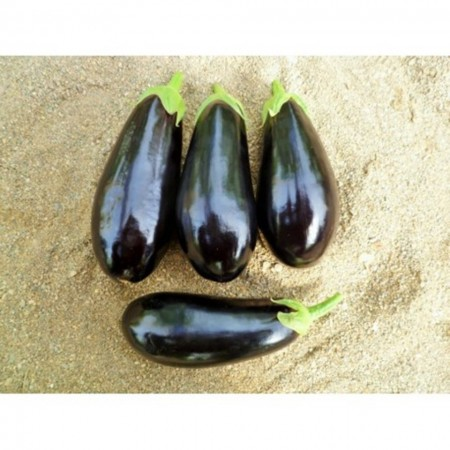 Seminte vinete Amara F1 (500 seminte), forma clasica, agroTIP
