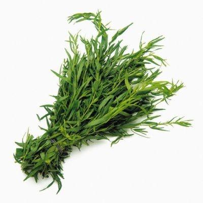 Tarhon - 0.2 gr - Seminte de Tarhon Planta Aromatica Perena de la Florian