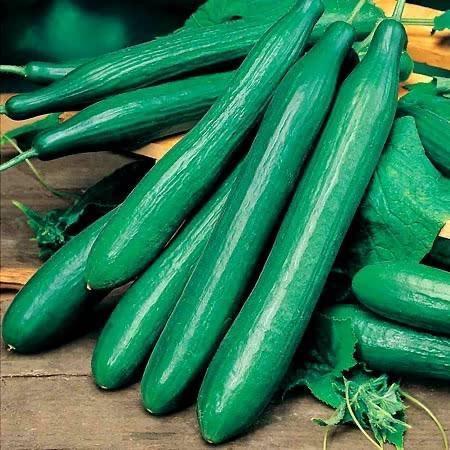 Tasty King F1 (20 seminte) seminte castraveti lungi, hibrid extra-timpuriu foarte productivt, Sakata