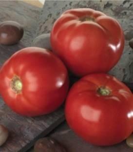 Tomatina F1 - 500 sem - Seminte de rosii cu fructe de marimi mari aproximativ 300-350 gr ce se preteaza excelent cultivarii in camp deschis cu maturitate extratimpurie de la Sakata