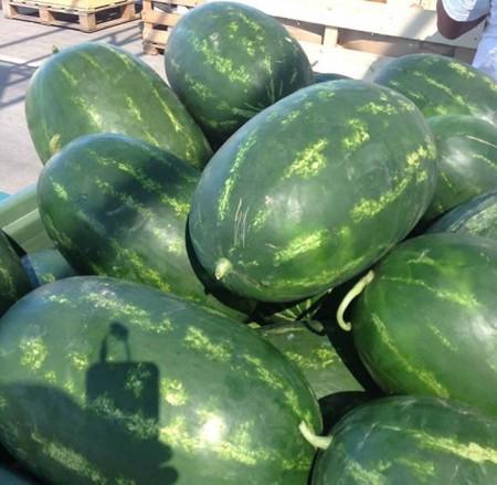 Torpila - 500 sem - Seminte de pepene verde oval semitimpuriu rezistenta mare 8-10 kg de la Nunhems