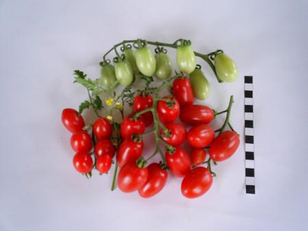 Alya F1 (70 seminte) de rosii tip cherry oval alungite, gust echilibrat dulce-acru, de la Florian
