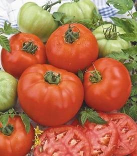 Benefica - 500 gr - Seminte de rosii cu fructe rotund-aplatizate fermitate buna capacitate de coacere excelenta ajungand la greutati de peste 200 de grame fiind destinate atat cultivarii in camp cat si consumului imediat United Genetics