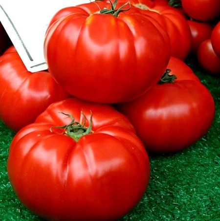 Boiereasca (0.5 gr) Seminte Tomate Mari de Culoare Rosu tip Gigant Uriase ajunge pana la 2 kg