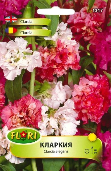Clarcia (Clarkia) - Seminte Flori Clarcia Planta Anuala de la Florian