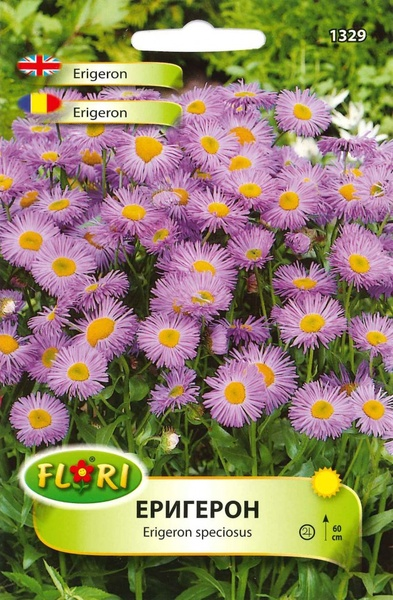 Erigeron (Batranis) - Seminte Flori Batranis de la Florian